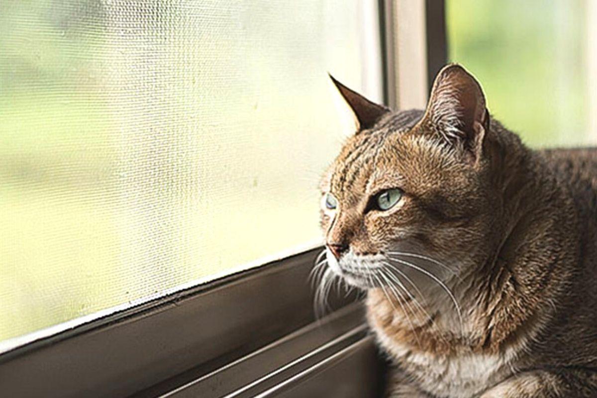 Características de las mosquiteras para gatos