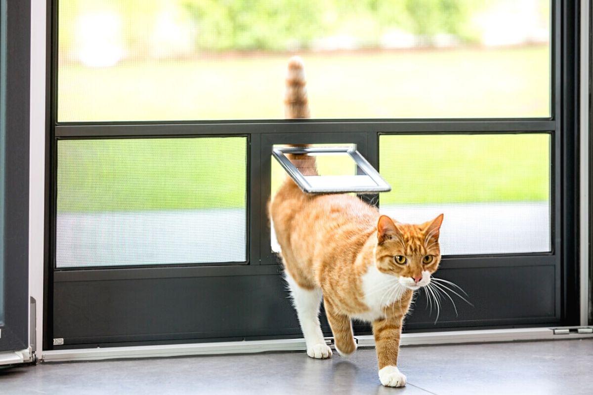 Gato entrando en una casa con mosquitera con gatera