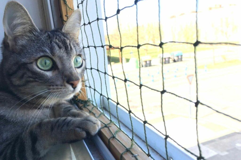 Mosquiteras para gatos
